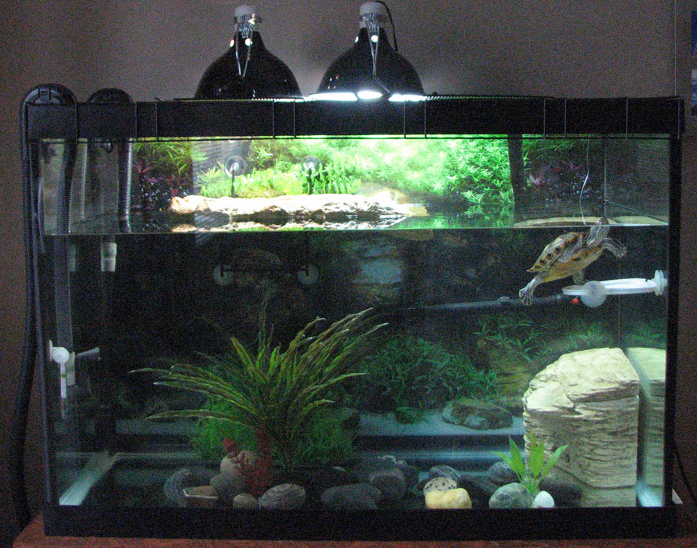 Redearslider com :: View topic - New 65 gallon with Fluval 405