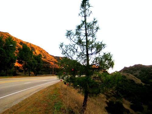 roadside christmas tree