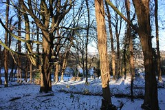 Wycombe Woodland, Daws Hill