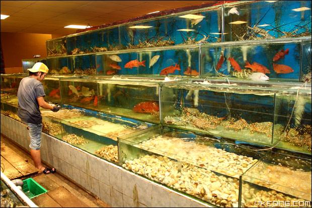 live-seafood-aquarium