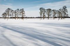 Quiet winter... (Danil) Tags: christmas winter shadow snow holland tree netherlands landscape nikon december daniel tag sneeuw nederland groningen polar schaduw 2009 friesland weiland landschap tiefschnee d300 vrijdag bomenrij bakkeveen waskemeer nohdr wijnjewoude winterscpae oostellingewerf