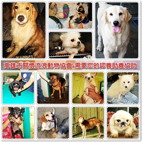 20091229「募資源與認養」高雄市關懷流浪動物協會-旗山繁殖煉獄犬,持續需要您的認養、助養、協助,轉PO也是很重要,謝謝您