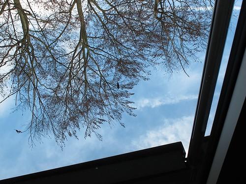 arbres 10.jpg