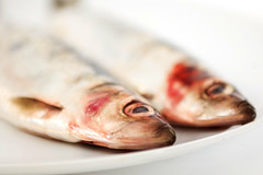 Herring (StuartWebster) Tags: food fish d50 nikon tasty herring sigma2470f28 interfitstudiolights
