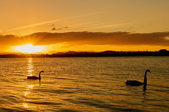 Follow me (RobMacPhotography) Tags: canberra act australia sunset lake water mountains sun rays clouds silhouette golden burley griffin swan swans black ripples reflection sony a6000 rob mac photography landscape