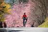 騎乘於武陵櫻花路上 (Hamster620) Tags: 台灣 taiwan 武陵農場 wulingfarm 花 flower