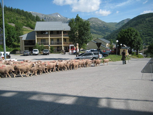 Sheep and Transhumance in Beuil