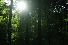 _MG_6188.JPG (zimbablade) Tags: hudsonriver chappaqua sleepyhollow videopoem