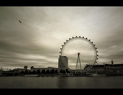 New Beginnings (edmundlwk) Tags: uk bird london wheel millenniumwheel thames river londoneye ferris embankment canon450d rebelxsi tokina1116mm edmundlim
