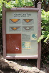 Thurston Lava Tube Photo