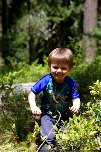 sequoia picking huckleberries - _MG_0173