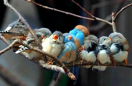 3810452857 169d9ccbd9 Beautiful Birds   The Splash of Colors!!!
