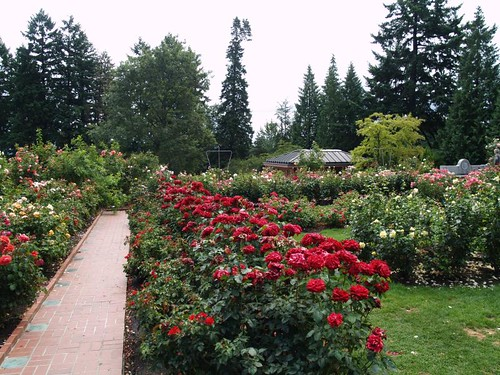 at the international rose test gardens