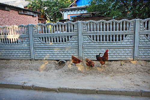 Chicken Door