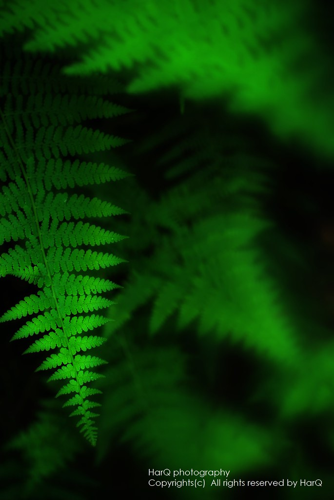 The Fern shines in green