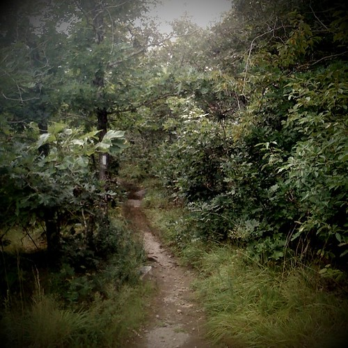 humid August hike {Holga}