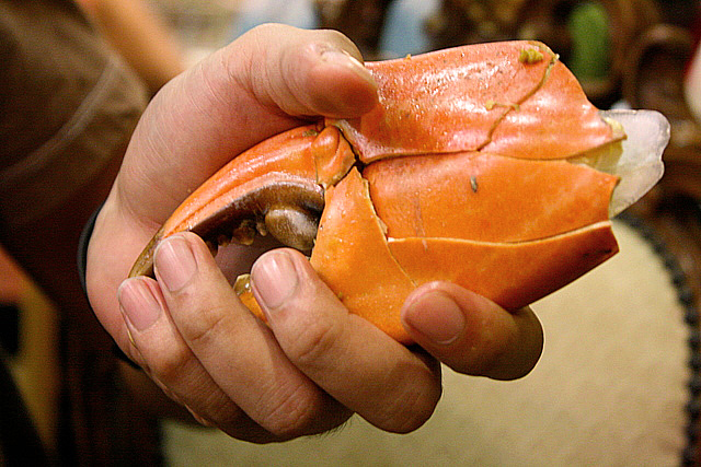 If this crab was alive, it could probably hand-wrestle you and win!