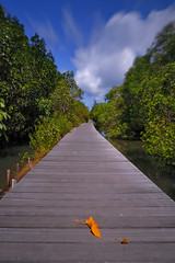 boardwalk in mangrove forest (tropicaLiving - Jessy Eykendorp) Tags: bali seascape green nature forest indonesia landscape vanishingpoint mangrove denpasar efs1022mmf3545usm outdoorphotography canoneos50d vosplusbellesphotos rawproccessedwithdigitalphotopro tiffproccessedwithadobephotoshopcs3 mangroveinformationcenterofdenpasarbali boardwalkinmangroveforest