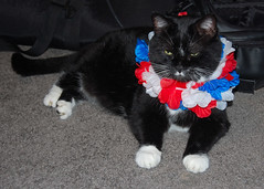 American Kitty (MaryinClare) Tags: baby kitty american ratt