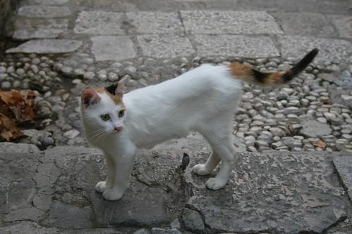 Croatia_0108