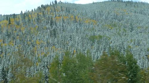 NDF - aspen trees