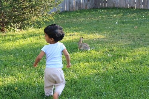 Milan n bunny