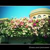 (Rainbow colorz) Tags: pink flowers blue fab sky house leaves bahrain soe supershot khamis mywinners shieldofexcellence anawesomeshot flickraward diamondclassphotographer farandawaythebest betterthangood ~newenvyofflickr~ arethesebuildingsnothisisart artistspotlightseptembercontestallthingsbeautiful