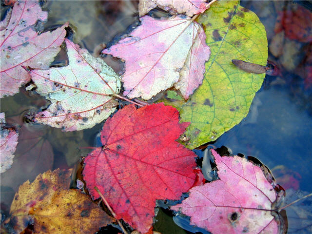 가을 단풍 배경화면