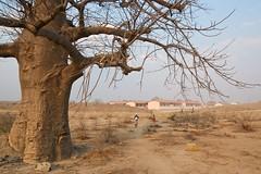 Women collecting firewood (Antonio Klaus) Tags: africa women nikkor mozambique tete 1424mm