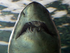 Sydney Aquarium (C) 2009