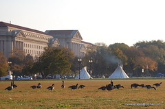 Some teepees on the mall in DC (Russ Sprague) Tags: mall washingtondc geese tourist nativeamerican canadageese teepees d40 nikond40 russxsprague