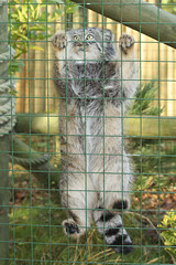 Adventure Playground (Julia-D) Tags: cat kent pallas pallascat whf