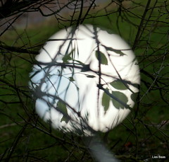 Nature upclose (LiesBaas) Tags: reflection leaves mirror photo leaf pix foto spiegel pic rearviewmirror blad blaadjes 2009 pictur fotograferen achteruitkijkspiegel kleurenfotografie colourphotographie liesbaas weerkaatsen