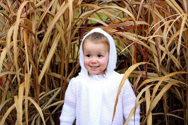 morgan in hay