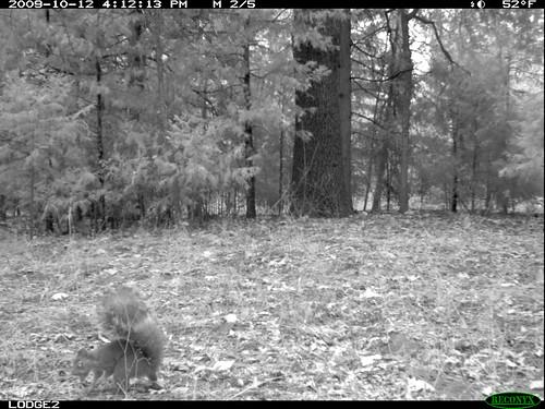 spooky squirrel