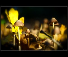 Light and colours (iomario ) Tags: macro nikon raw funghi autunno luce naturesfinest sottobosco iomario lamiciziafaladifferenzatheoriginalgroup theauthorsplaza authorsclub