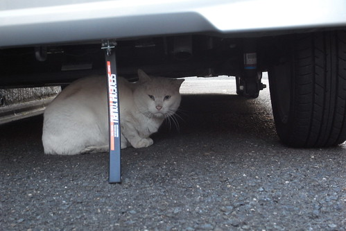 Today's Cat@20091206