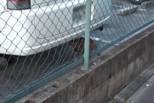 Today's Cat@2010-02-04