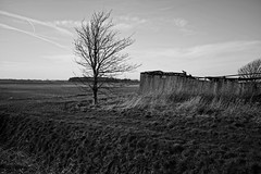 Tumble down farm buildings (Fitzrovia) Tags: winter building tree abandoned field buildings moss iron flat farm bare sony lancashire derelict corrugated corrugatediron the carlzeiss farmbuildings inexplore themoss sonnart sonyrx1