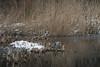 Rotterdam 12-02-2017-7 (Pure Natural Ingredients) Tags: rotterdam zuidholland netherlands nl nederland thenetherlands zuid holland winter snow sneeuw landschap landscape kralingen kralingseplas lake bos kralingse cold koud