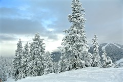 Brief moment when the sun broke through the cloud (In explore Feb 11,  2017) (christinachui79) Tags: snow snowscape forest hill mountain trees cloudy white outdoor outdoors nikon photography beautiful nature flickr scenic scenery winter skiing ski