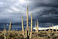 Apache Trail Snow-21a (wNG555) Tags: phx 2012 apachetrail superstitionwilnderness canon eos 400d arizona