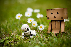 Danbo Walking the Dog (centrax) Tags: dog daisies robot daisy aibo carboard danbo  danboard  cardbo latteaibo