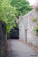 Stone Wall Along the Path