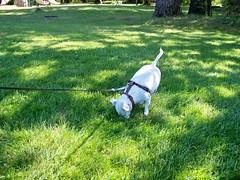 Quasi at the park