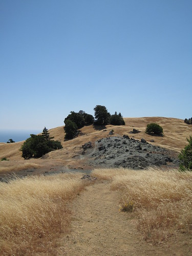 On the side of Mt. Tamalpais in in the summer.