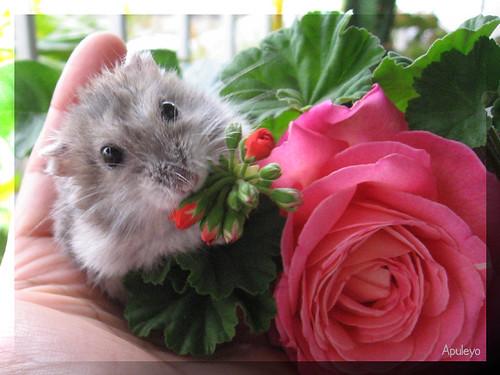 Фото хомячков с цветами