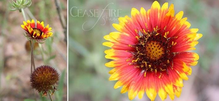 08-06-flowers2