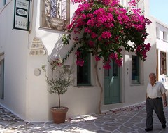 Naxos Island - Greece - 2009 (CarlosCoutinho) Tags: travel summer island greek mediterranean aegean hellas greece cyclades naxos olivetree bouganvillia halki kyklades