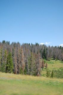 Pine Beetle Damage, Colorado